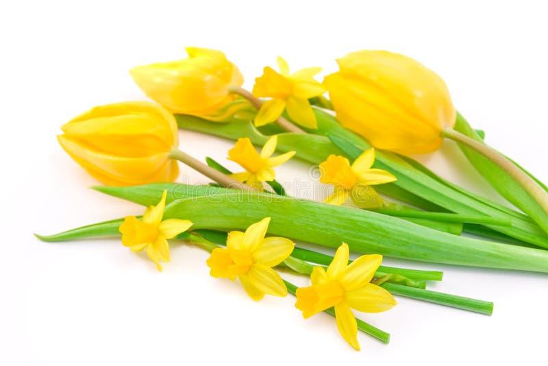 Tulipanes y narcisos fotos de archivo libres de regalías