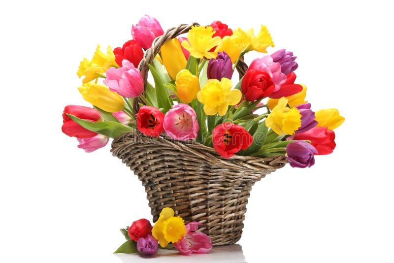 Tulipanes y narcisos en cesta fotos de archivo