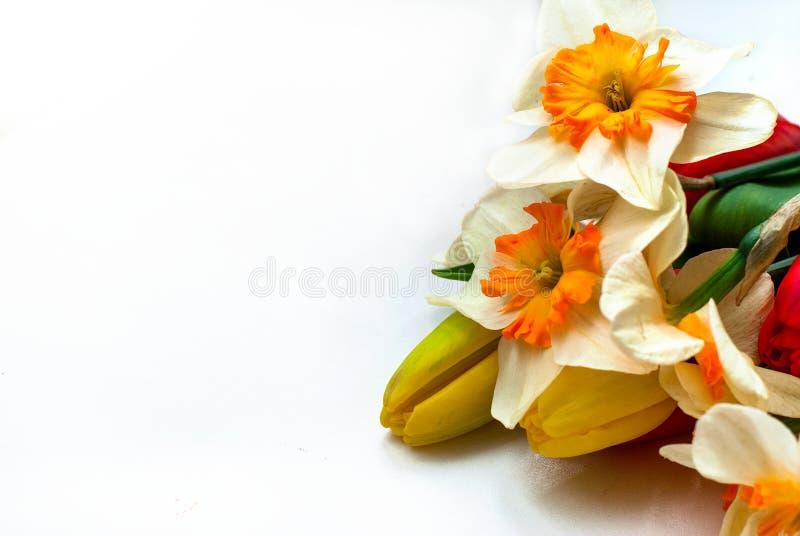 Tulipanes y narcisos hermosos de la primavera imagenes de archivo