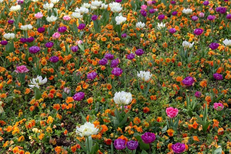 Tulipanes y otras flores imagenes de archivo