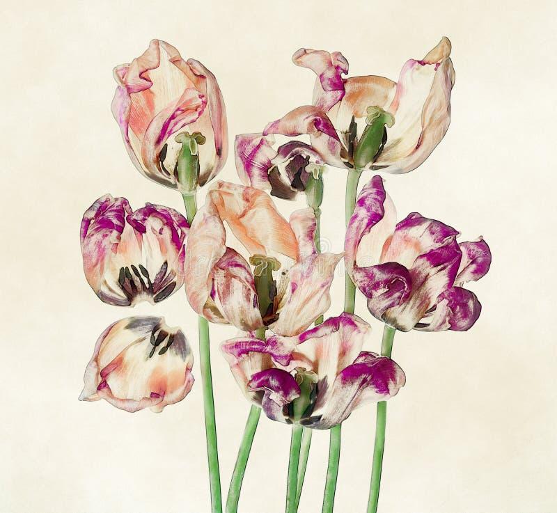 Tulipanes y pétalos coloridos stock de ilustración