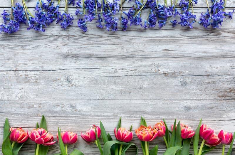 Tulipanes y scillas coloridos fotos de archivo