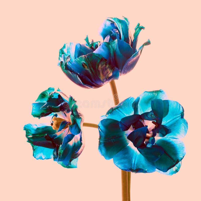 Tulipani appassiti blu, immagine tranquilla stilizzata immagini stock