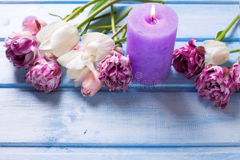 Tulipani bianchi e rosa della molla e candela viola fotografia stock