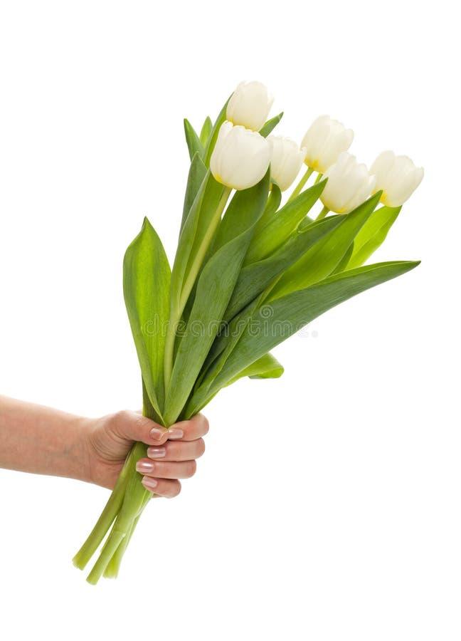 Tulipani bianchi in mano della donna fotografie stock