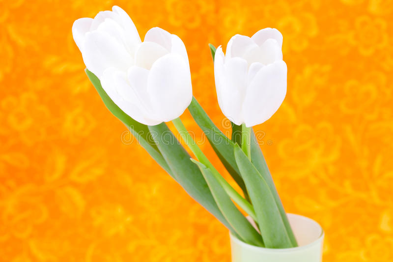 Tulipani bianchi su una priorità bassa arancione fotografie stock libere da diritti