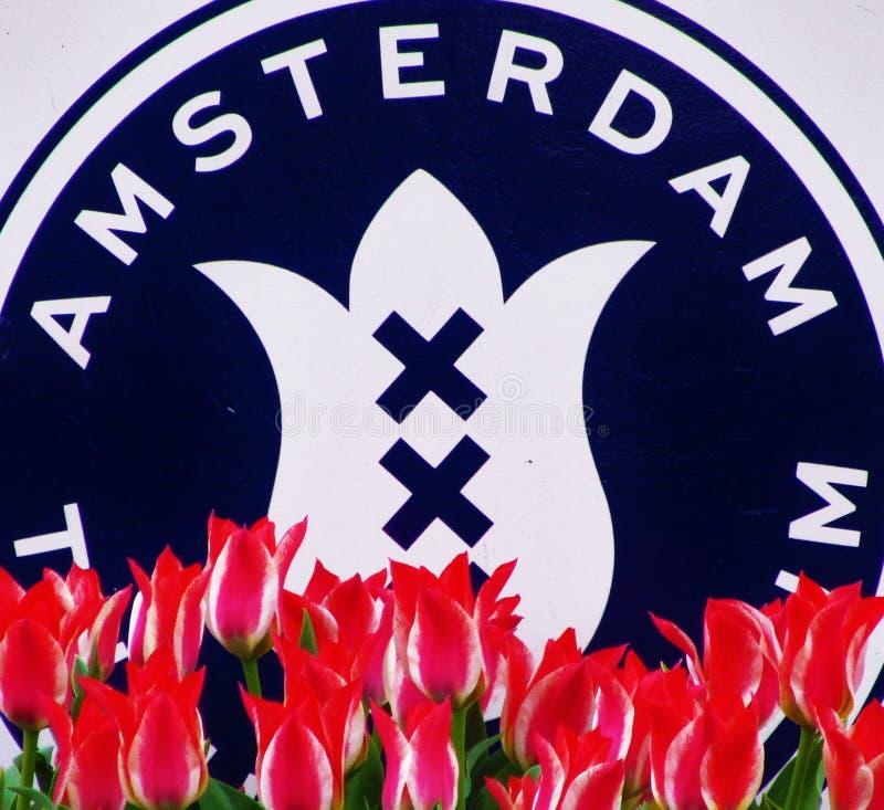 Tulipani Colourful di Amsterdam immagini stock