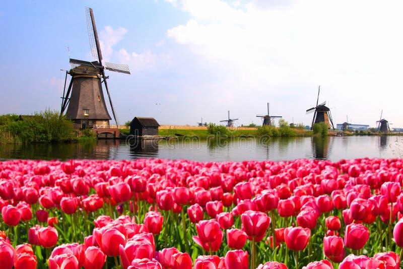 Tulipani con i mulini a vento olandesi ed il canale fotografie stock libere da diritti