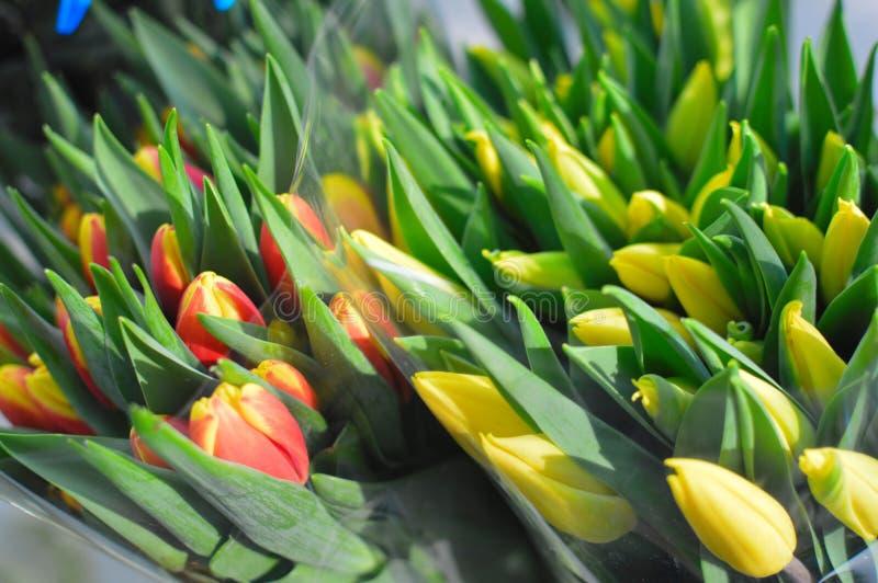 Tulipani delicatamente gialli su un fondo blu immagini stock libere da diritti