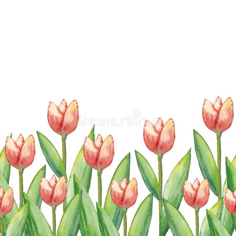 Tulipani dell'acquerello di vettore, illustrazione disegnata a mano dei fiori della molla, illustrazione orizzontale floreale royalty illustrazione gratis