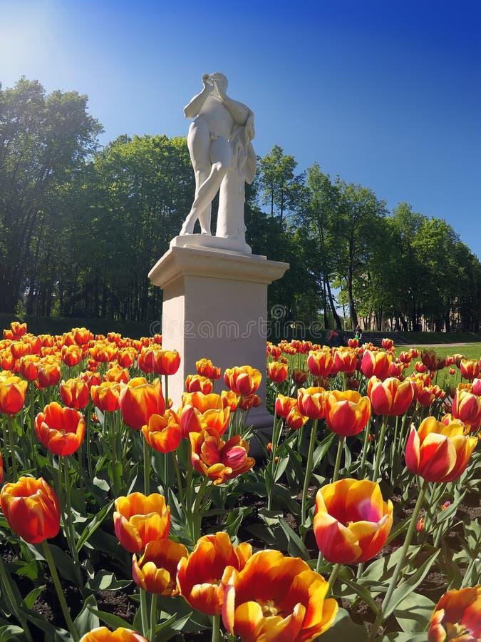 Tulipani della primavera in parco Gatcina La Russia fotografie stock libere da diritti
