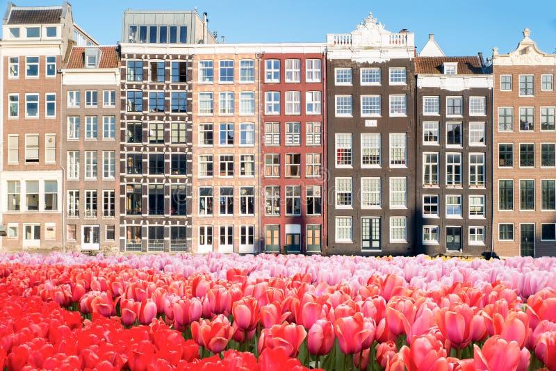 Tulipani e case olandesi di tradizione a Amsterdam, Paesi Bassi fotografie stock libere da diritti