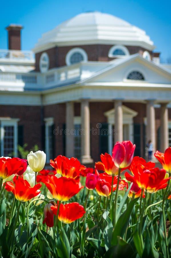 Tulipani e cupola rossi di Monticello immagine stock