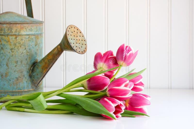 Tulipani e latta di innaffiatura fotografia stock