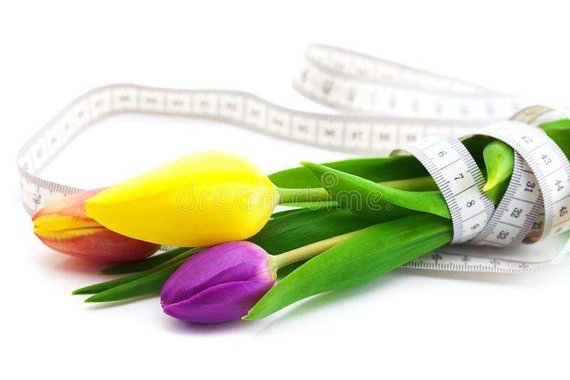 Tulipani e nastro di misura isolato su bianco fotografie stock libere da diritti