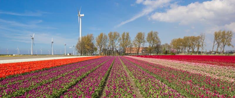 Tulipani, generatori eolici e un'azienda agricola fotografia stock libera da diritti