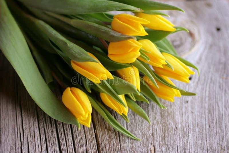 Tulipani gialli immagini stock libere da diritti