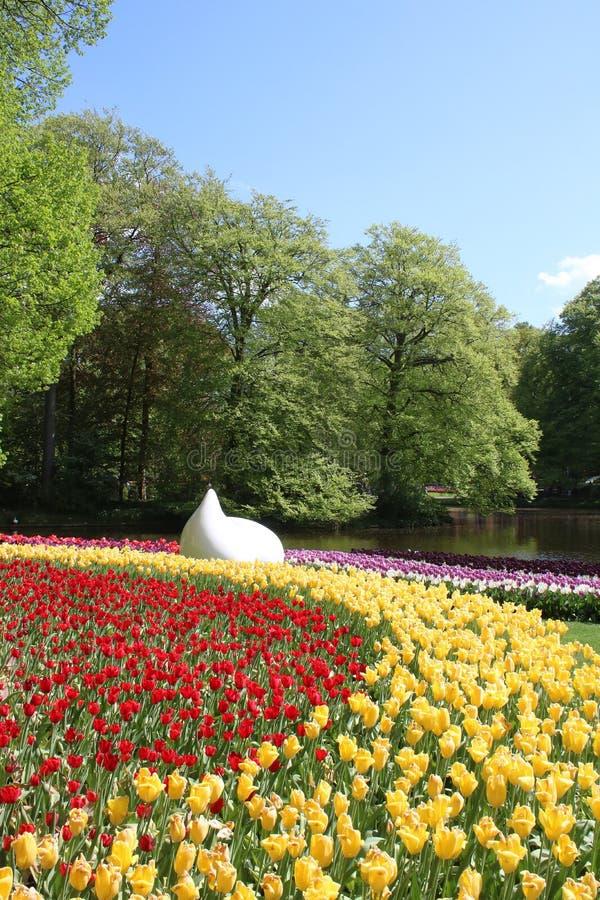 Tulipani gialli rossi, alberi, lago, giardini di Keukenhof fotografia stock