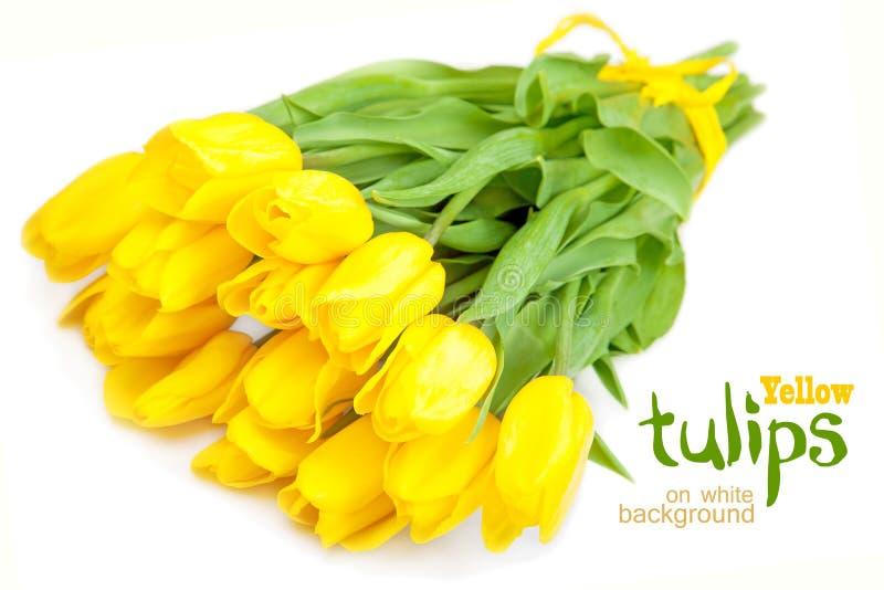Tulipani gialli su priorità bassa bianca immagine stock libera da diritti