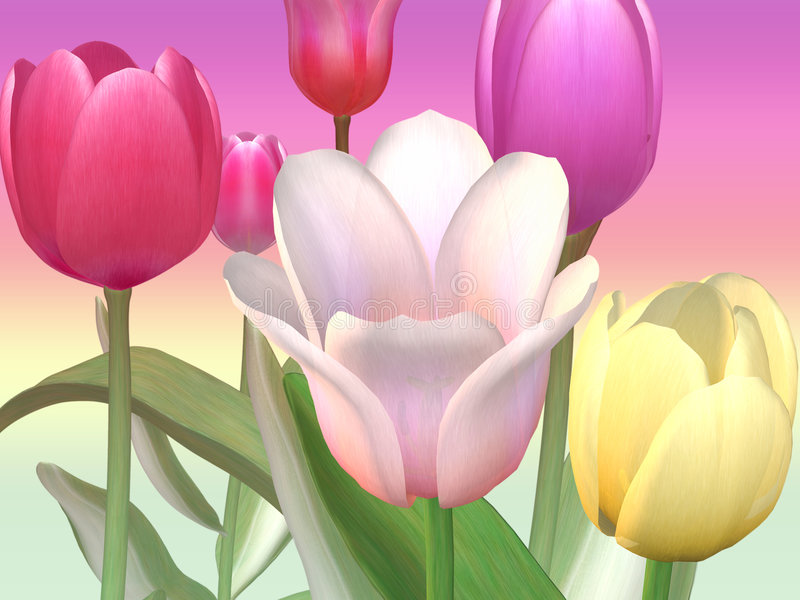 Tulipani luminosi illustrazione di stock