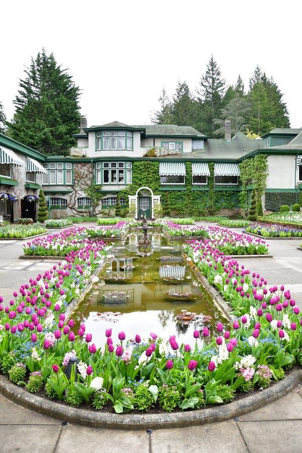 Tulipani nei giardini di Butchart Victoria BC fotografia stock
