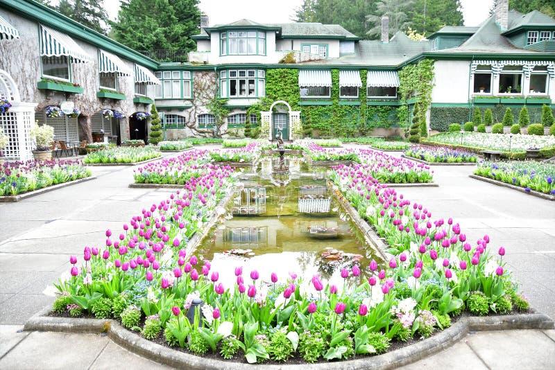 Tulipani nei giardini di Butchart Victoria BC fotografie stock