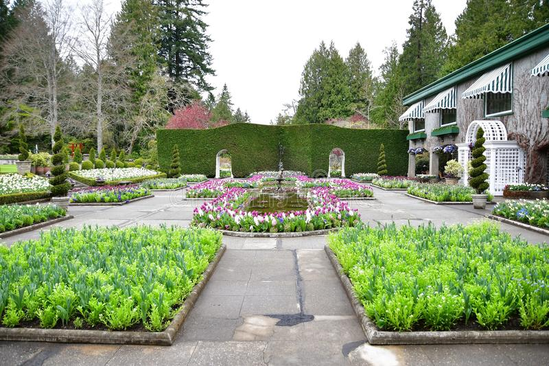 Tulipani nei giardini di Butchart Victoria BC immagini stock