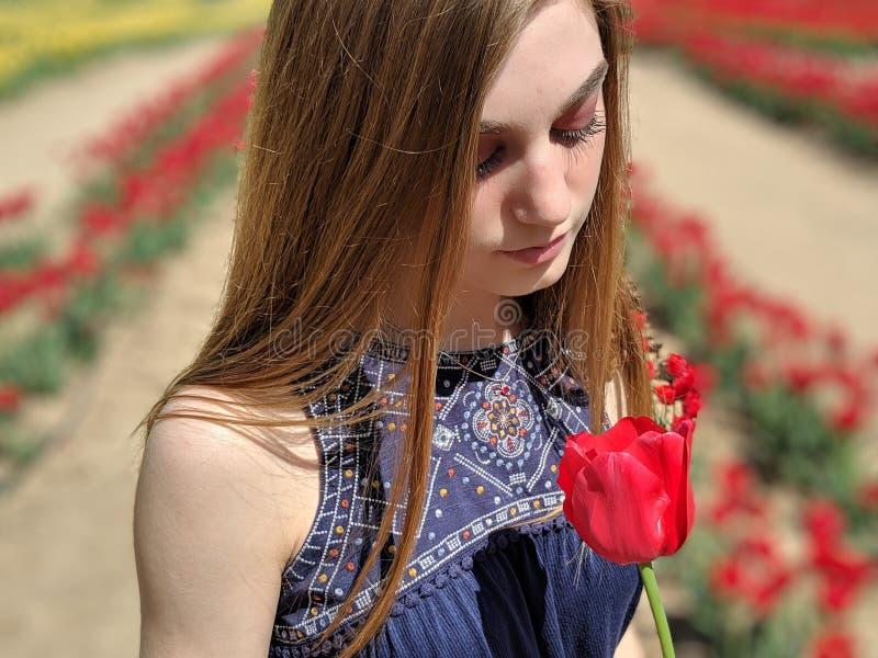 Tulipani nel Texas fotografia stock libera da diritti