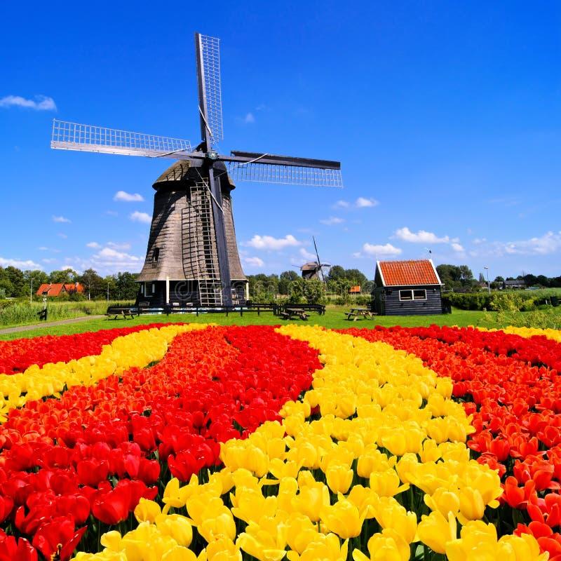 Tulipani olandesi e mulino a vento fotografie stock
