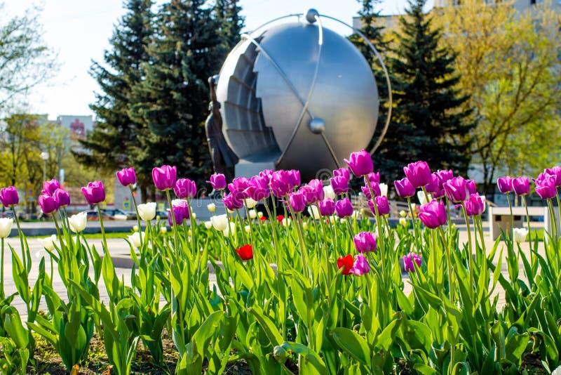 Tulipani rosa e bianchi nel parco fotografie stock