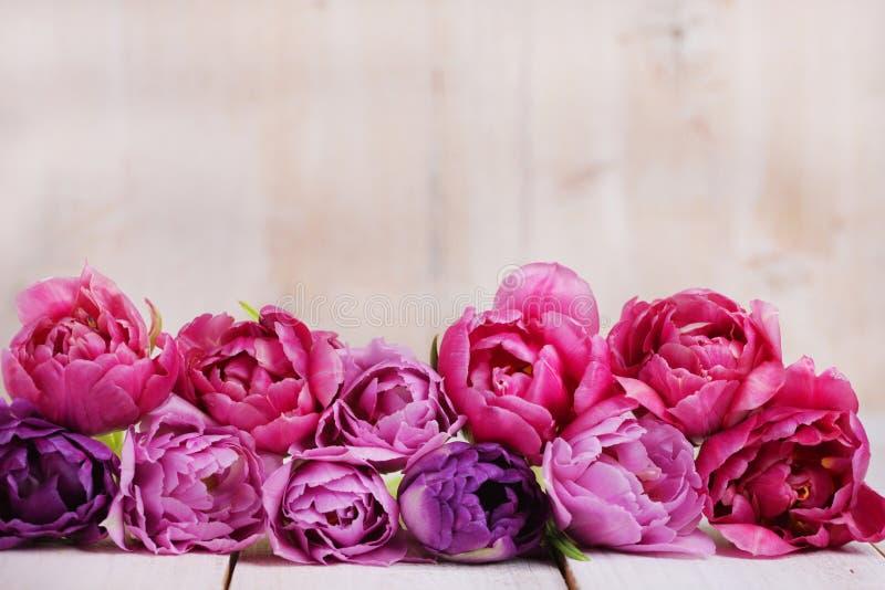 Tulipani rosa in una fila immagini stock libere da diritti