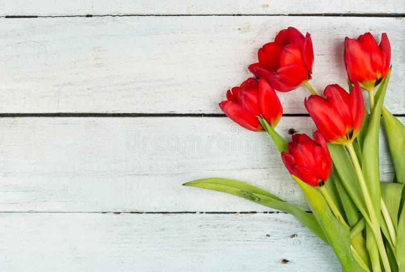 tulipani rossi su una priorità bassa bianca fotografia stock libera da diritti