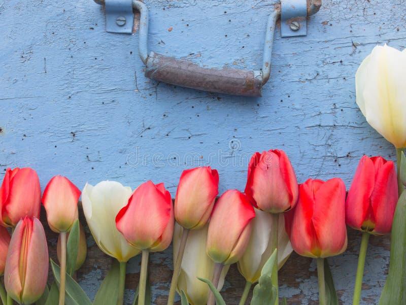 Tulipani rossi su una vecchia porta blu con una maniglia di porta fotografie stock