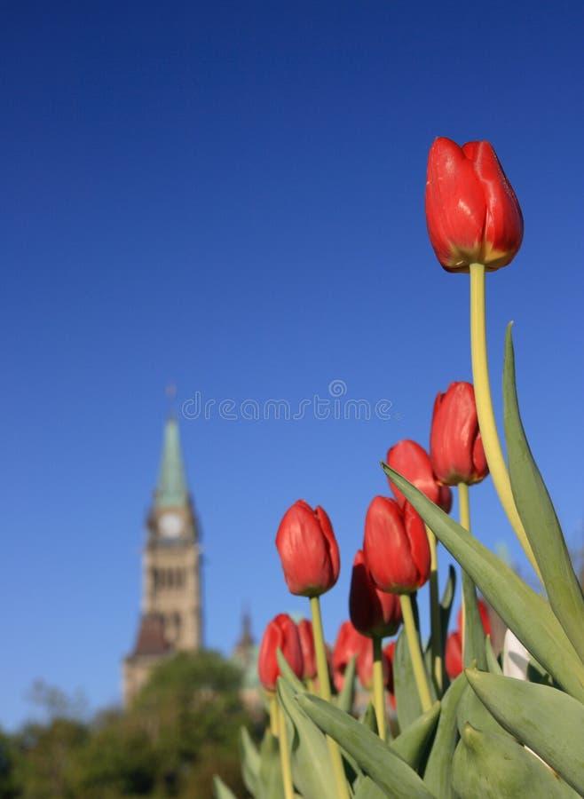 Tulipani rossi - torretta di pace immagine stock libera da diritti