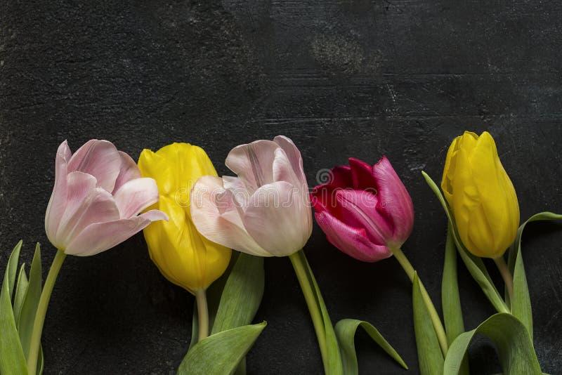 Tulipani su un fondo nero fotografia stock
