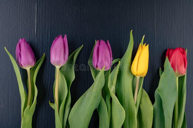 Tulipani su una tavola scura Bei fiori pronti per sistemare il mazzo fotografia stock libera da diritti