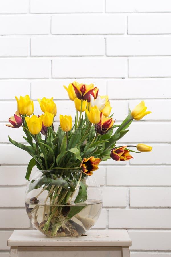 Tulipani in un vaso trasparente immagini stock libere da diritti