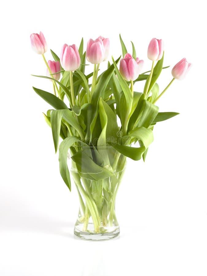 Tulipani in vaso immagini stock