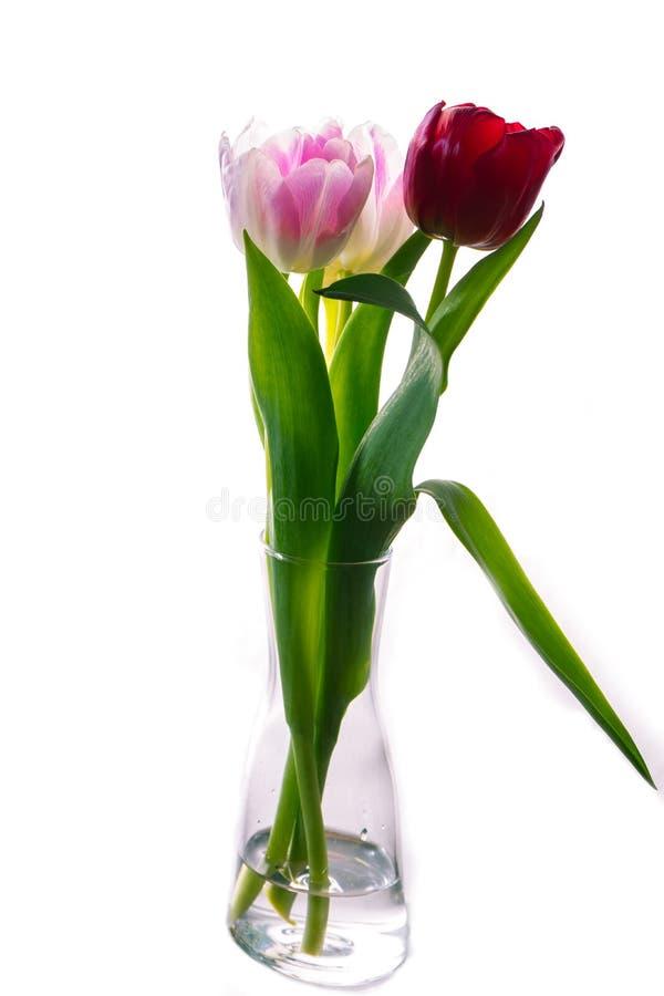 Tulipani in vetro immagine stock libera da diritti