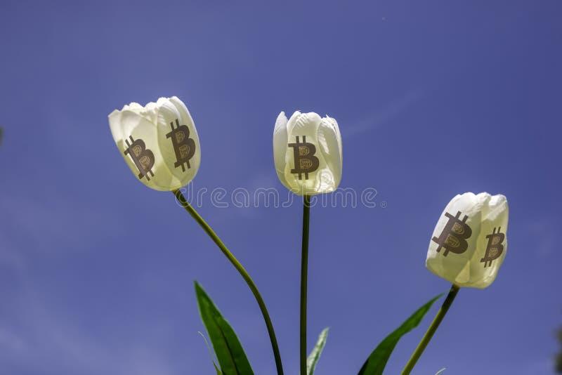 Tulipano e simbolo di Bitcoin fotografia stock