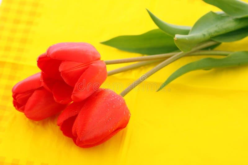 Tulipano rosso con le gocce di rugiada fotografia stock libera da diritti