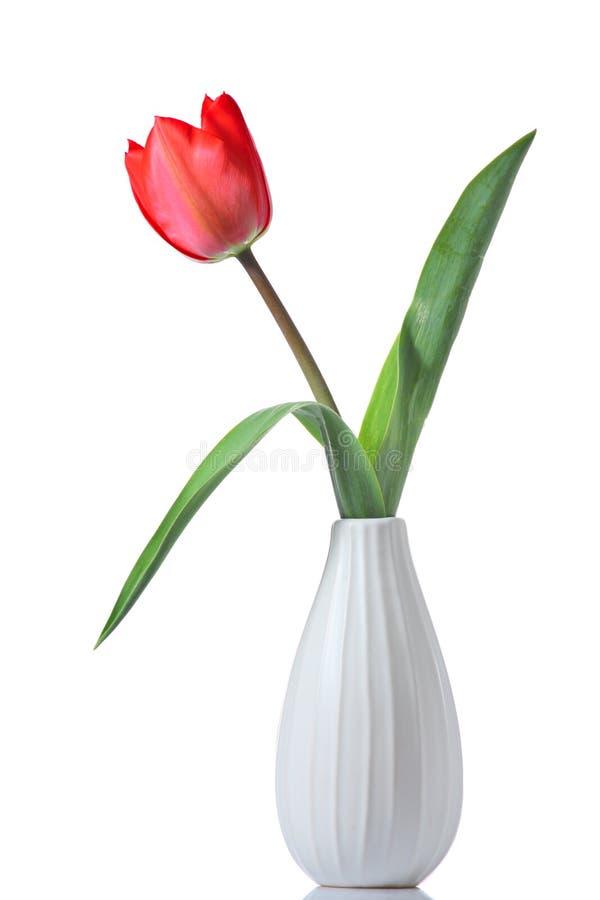 Tulipano in un vaso fotografia stock