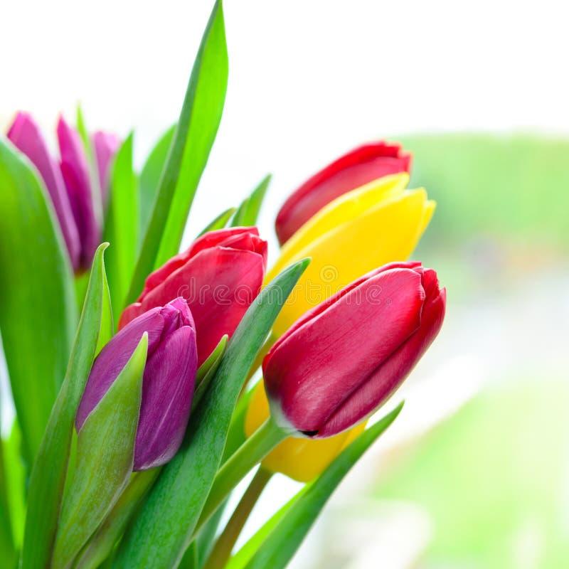 Tulipanowi kwiaty zdjęcia royalty free