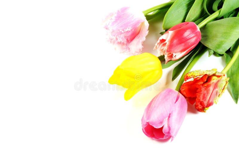 tulipanowi piękni kwiaty obraz stock