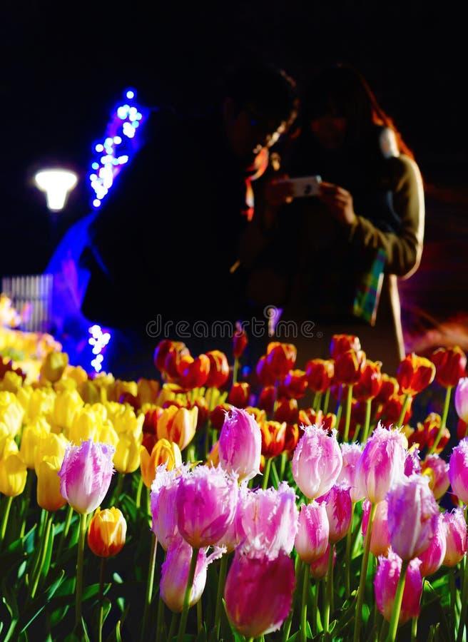 Tulipanowi pola obraz royalty free