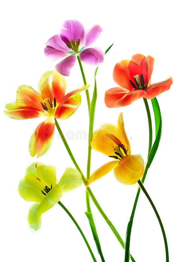 Tulipanowy Bocquet fotografia royalty free