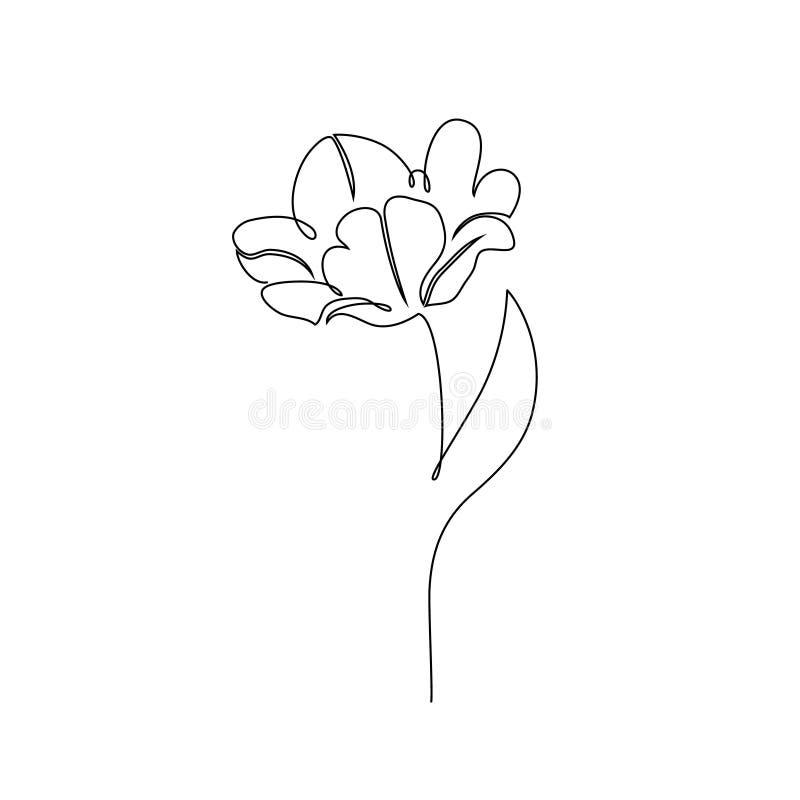 Tulipanowy kwiat na bielu royalty ilustracja