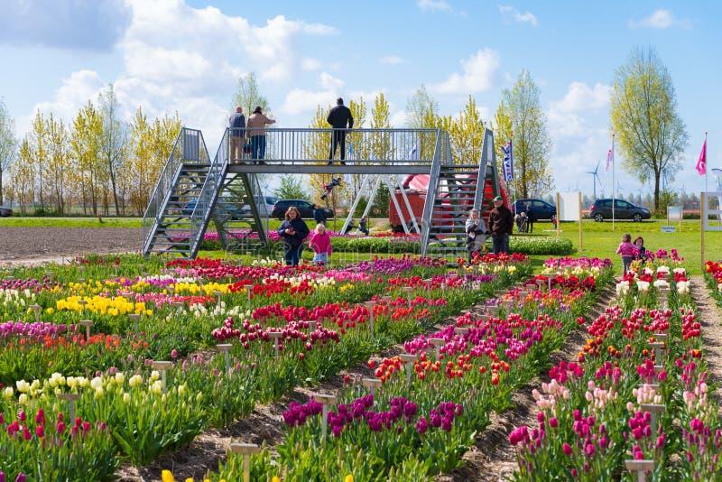 Tulipanowy przedstawienie ogród fotografia stock