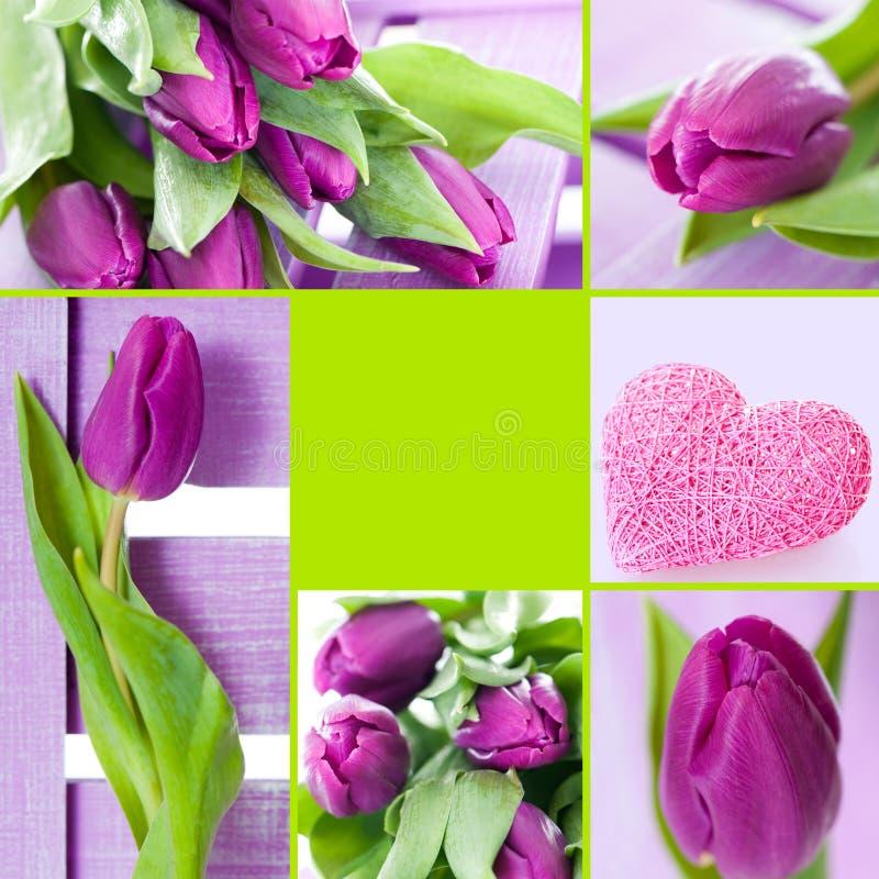 Tulipanu kolaż zdjęcie royalty free