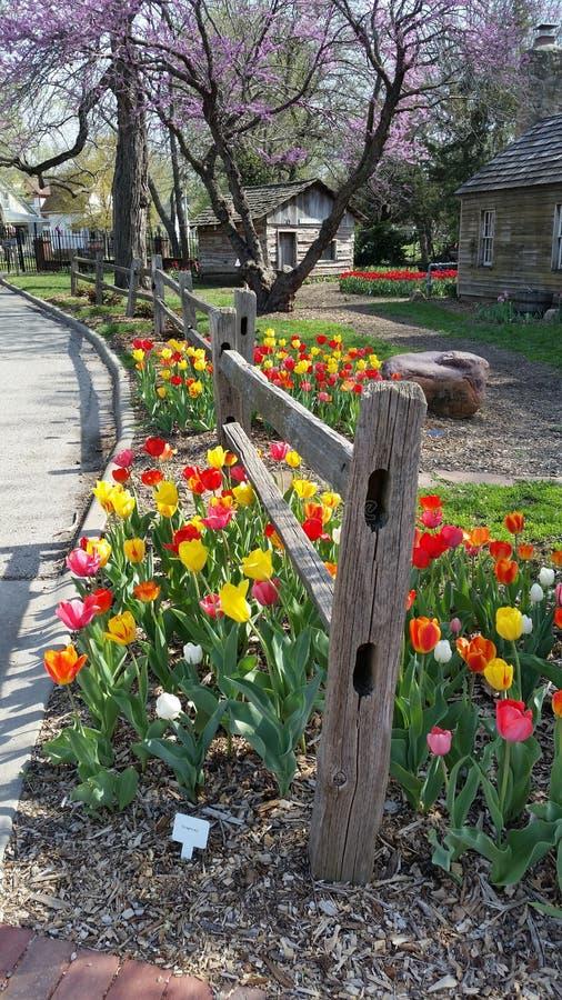 Tulipanu ogrodzenie fotografia royalty free